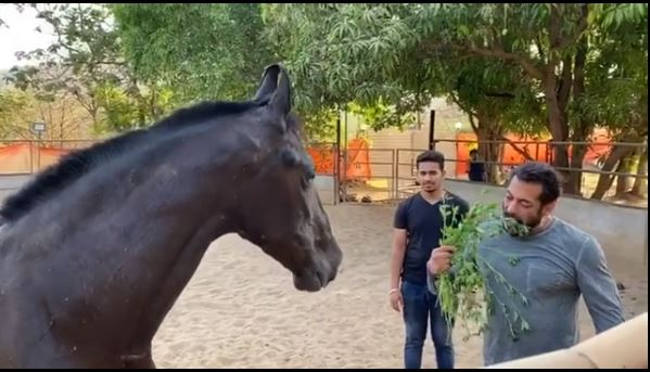Watch Salman Khan Eating Leaves With His Horse