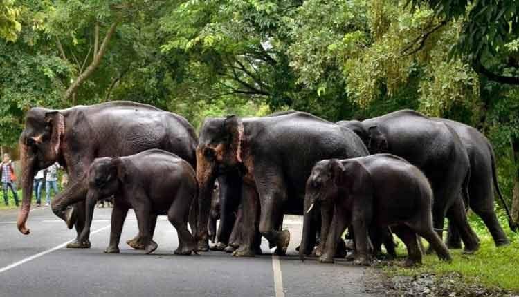 Man-Elephant Conflicts Resurface In Odisha Amid Covid Lockdown
