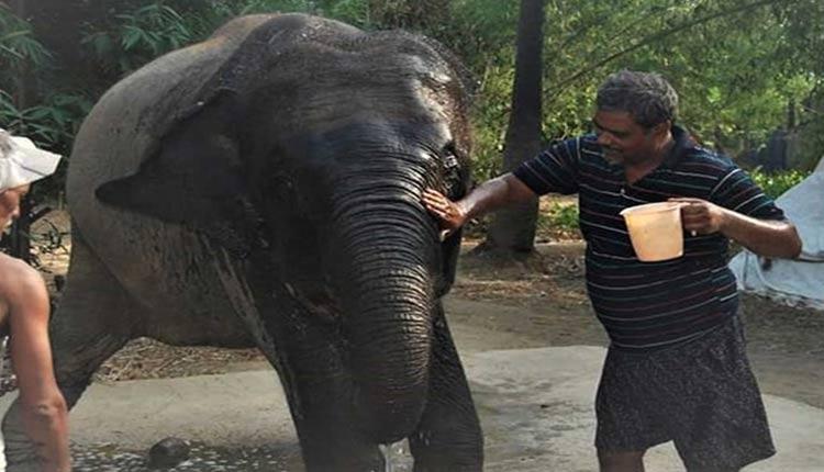 Haati Mere Saathi: Bihar Animal Lover Wills His Property To Two Elephants