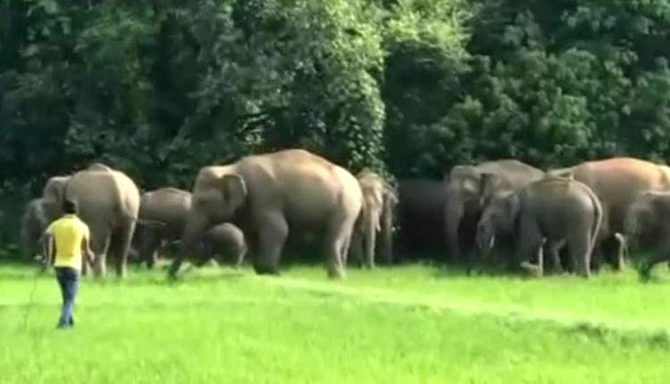 Odisha Issues Elephant Monitoring Mechanism Guidelines
