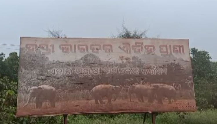 Elephant Deaths In 'Poachers' Trap: Odisha Forester, Guard Suspended