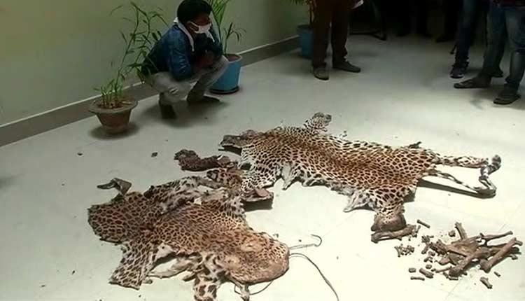 leopard skin smuggling racket busted in Odisha's Nayagarh