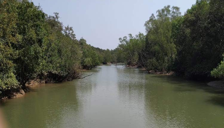 Mangrove withstood cyclone Amphan, saved Bhitarkanika national park