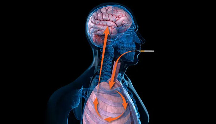 Nicotine Aids Spread Of Lung Cancer To Brain Leading To Deadly Metastatic Tumours
