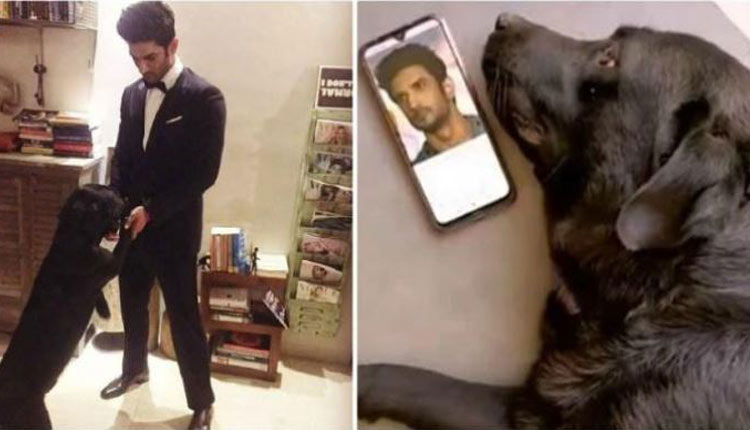 Sushant Singh Rajput's Pet Dog Fudge 'Dies' After Shunning Food Following Actor's Death