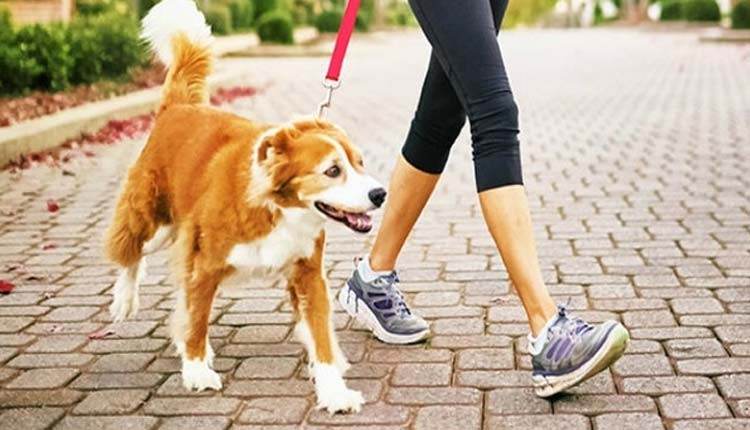 pets to allowed to go outside for walk