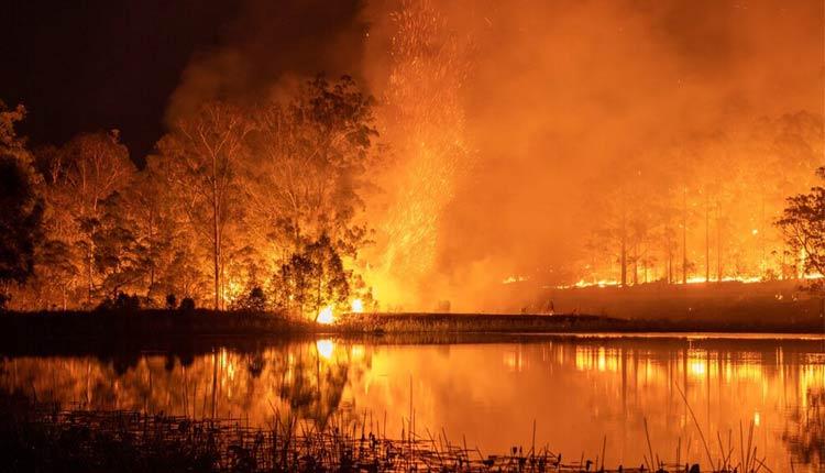 Australian Bushfires: Over 3 Billion Animals Killed & Displaced