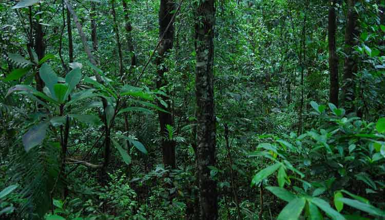 Scam In CAMPA Forest Funds
