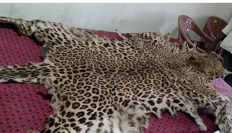 leopard smuggling