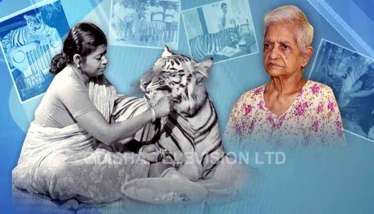 Tigress Khairi Unique animal-human love
