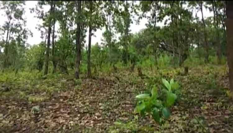 9 lakh sal trees to be felled in Odisha