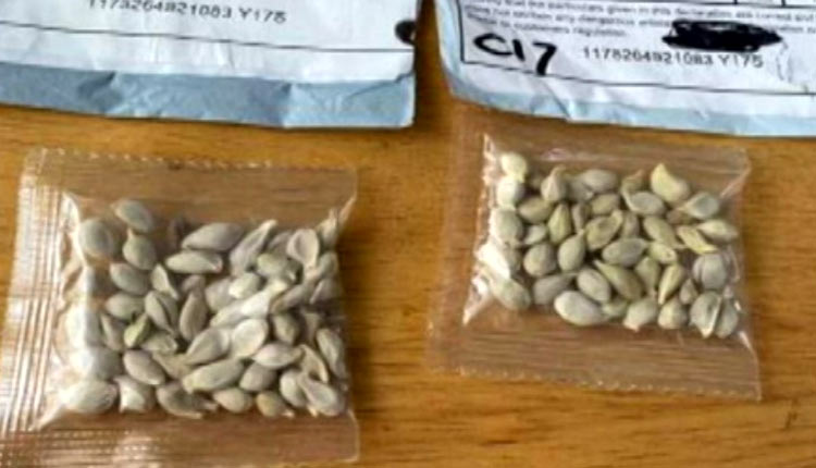 Govt Cautions Farmers On 'Mystery Seed' Parcels From Unknown Sources