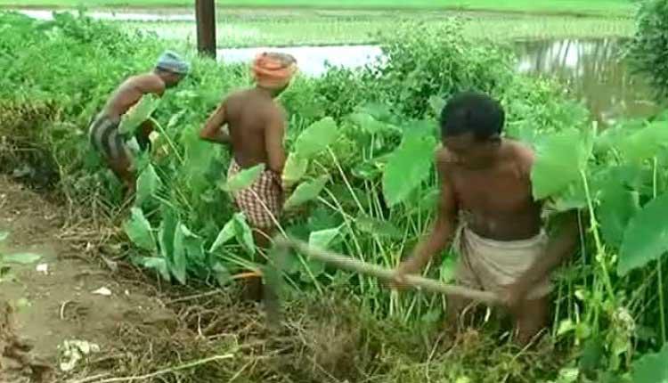Scanty Rainfall, Poor Irrigation System Worry Odisha Farmers
