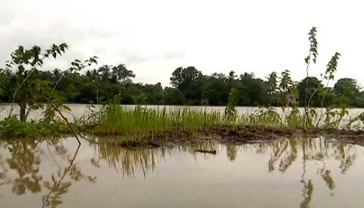 Incessant Rain, Low Pressures Worry Odisha Farmers