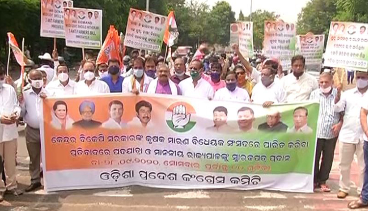 Odisha Congress Up In Arms Demanding Roll Back Of Farm Bills