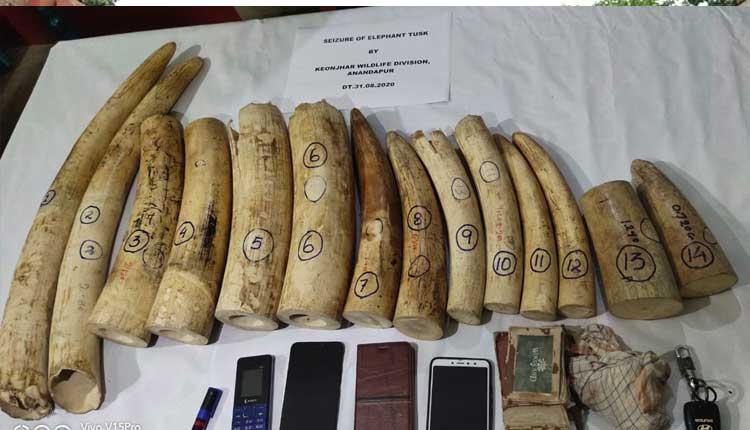 Elephant Tusks Worth Rs 10 Lakh Seized In Odisha, 3 Detained