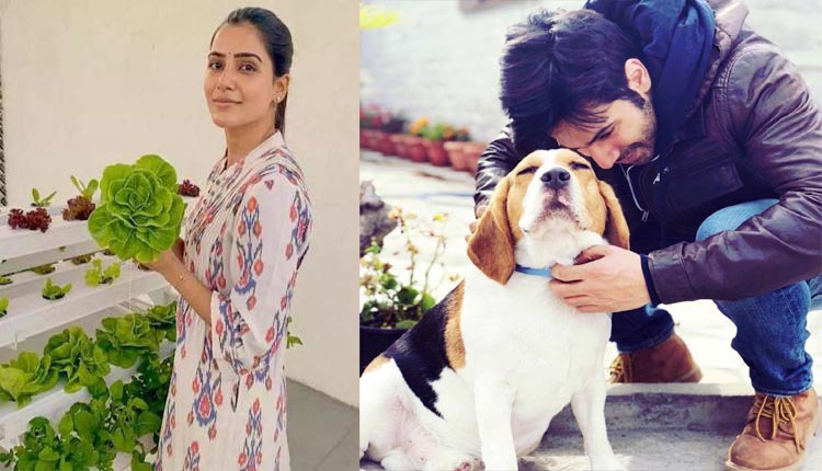 Varun Dhawan with his dogs and Samantha gardening