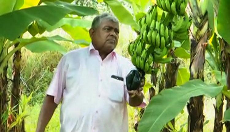 Organic Farming Is The Way Forward, 77-YO Odisha Man Shows How