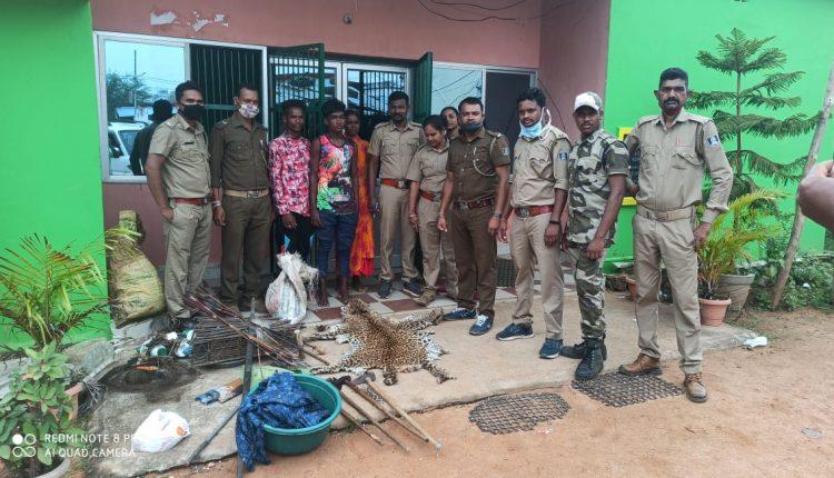 Leopard Head And Skin, Wild Boar Meat, Pangolin Scales Seized In Odisha