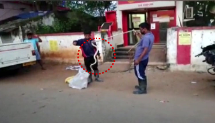 Watch: 5 Feet-Long Cobra Found Inside ATM Kiosk in Sambalpur; Rescued After 4 Days