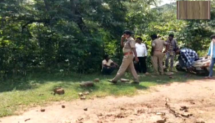 Odisha: Fear Grips Villagers After Cow Killed In Suspected Tiger Attack