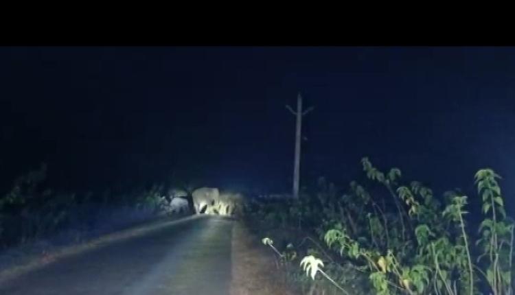 Elephants wreak havoc