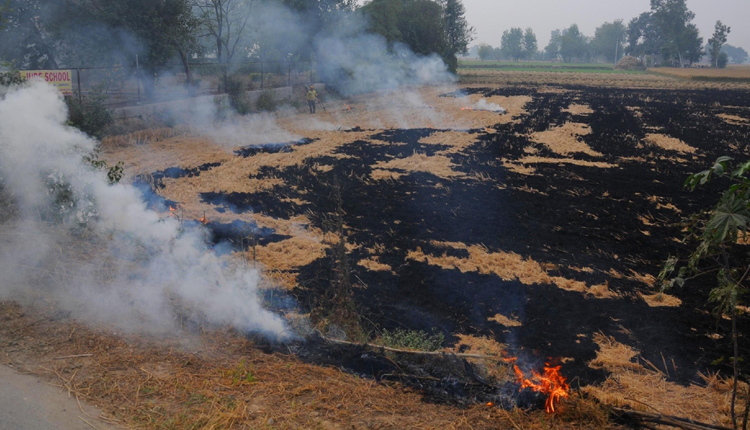 40% Of Delhi Pollution Caused By Stubble Burning