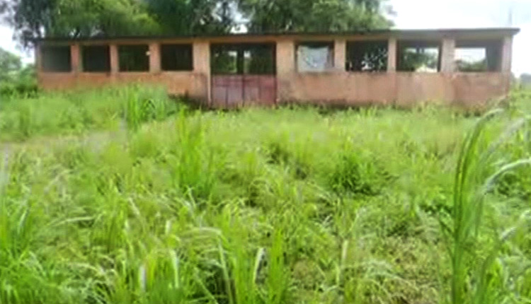 Fodder Grass Farm In Kendrapara Begs For Revival