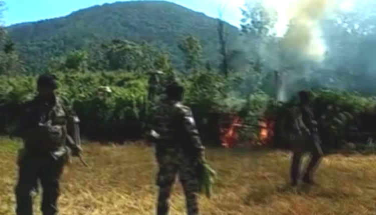 Ganja Cultivation Worth Rs 1.5 Cr Destroyed In Kandhamal, Over 4 Cr Razed in 15 Days