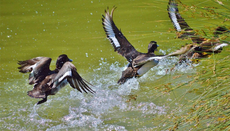 The officials of Tangi wildlife division on Monday arrested two poachers on the charges of hunting migratory birds in Chilika Lake, largest brackish water lagoon in the continent.