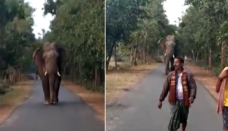 Selfie Contest Fumes Tusker In Odisha's Mayurbhanj (WATCH)
