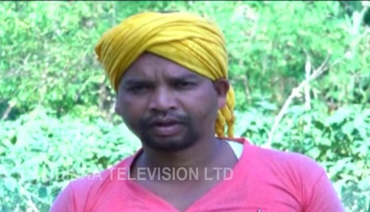 Big Shift! Meet This Tribal Man From Odisha Who Gave Up Hunting To Grow Veggies On Mountains