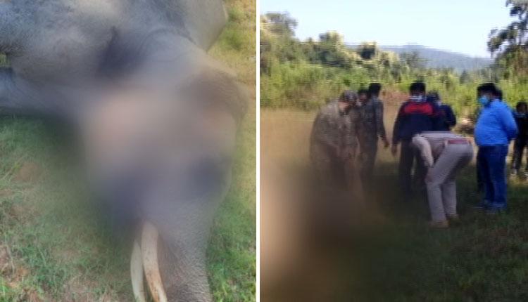 Tusker Electrocuted In Sambalpur, Elephant Calf Dies In Aska