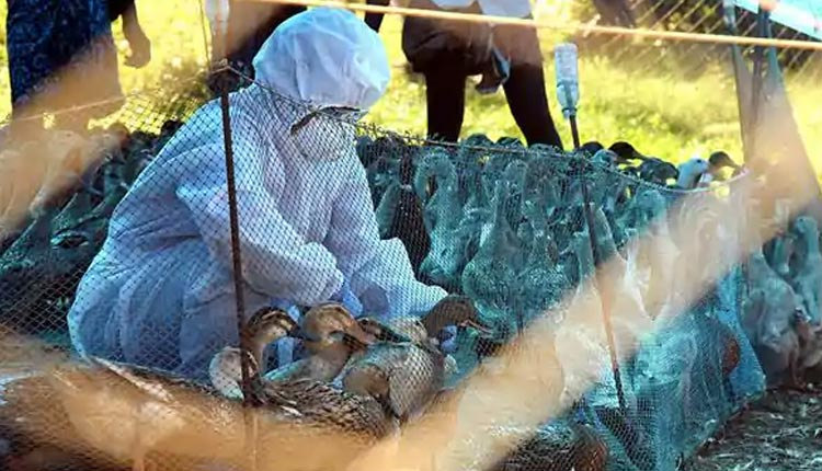 Bird Flu: Outbreak Confirmed In 7 States, Test Reports From Other States Awaited