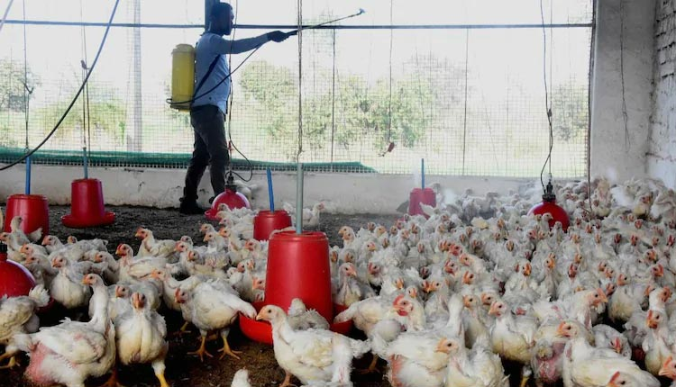 All About Bird Flu: Outbreaks in Odisha, Threats to Human, Symptoms And Prevention