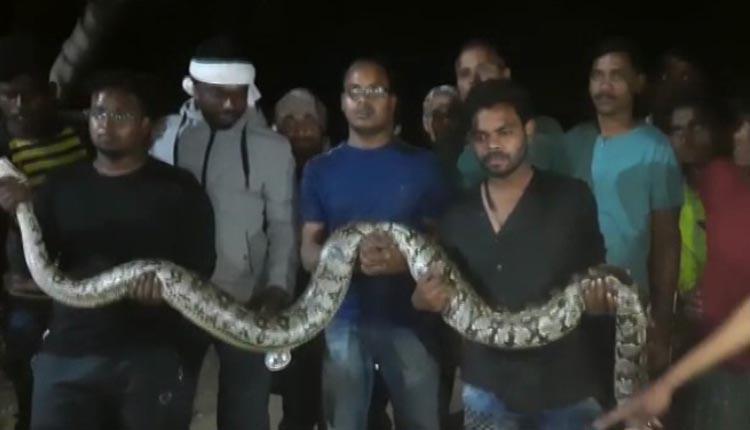 Python rescued