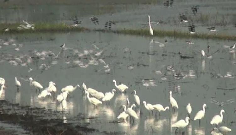 Annual Bird Census Begins In Odisha