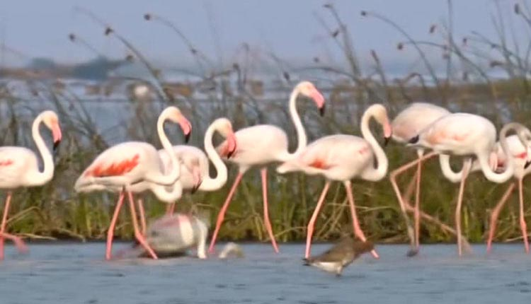 Bird Census In Odisha: Count Of Winged Guests Surpasses Previous Year Tally By 4 Lakh!