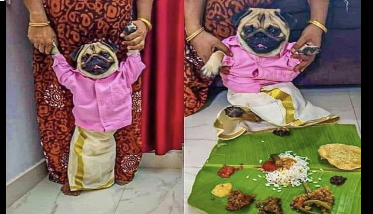 Pug As Groom, Dog Owner Scouts For 'Rishtas' on Social Media!