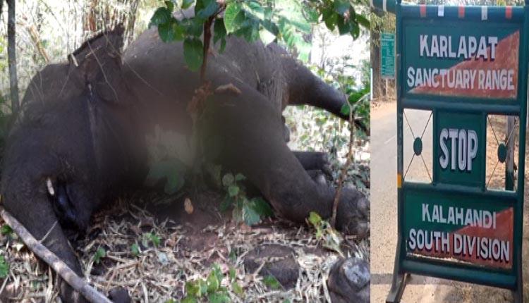 Elephants-Death