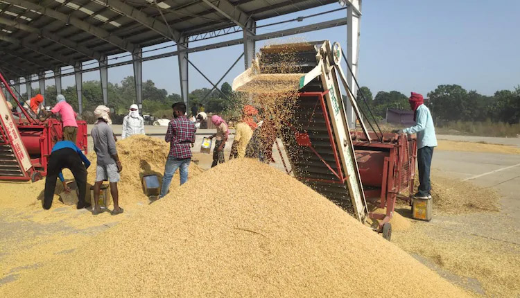 Paddy Procurement Sees Hike From Last Year