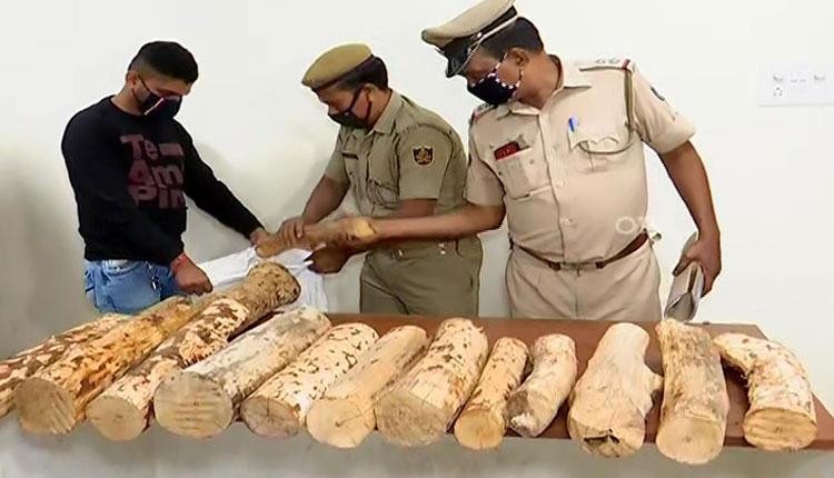 Sandalwood Smuggler Held In Odisha, Logs Worth Rs 10 Lakh Seized