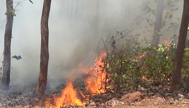 Prakash Javadekar decided to form expert team to help Odisha government to help control the unprecedented forest fire incidents in the state.